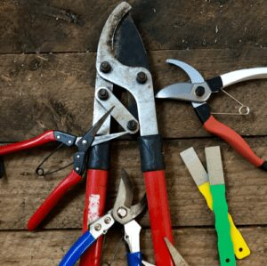 Best Pruner Shears