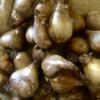 6 Keys to Bulb Planting Success