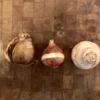 Flower Bulbs: How To Choose The Best Bulbs